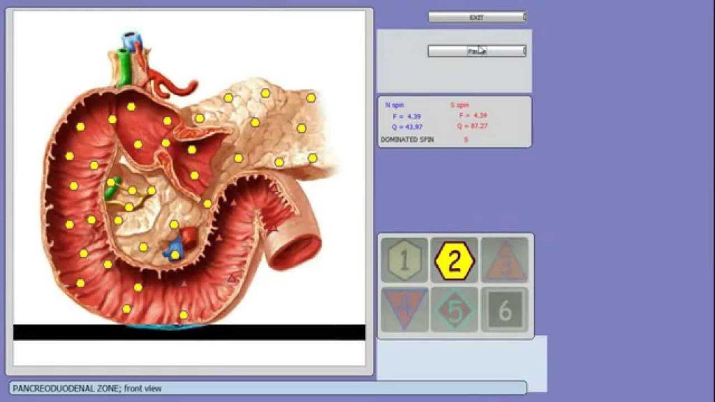 8d nls gesundheit analysator